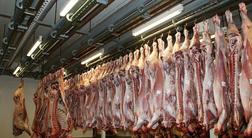 animali uccisi america carne