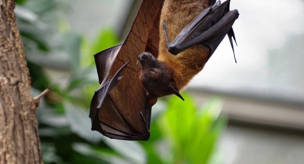 pipistrello in giardino